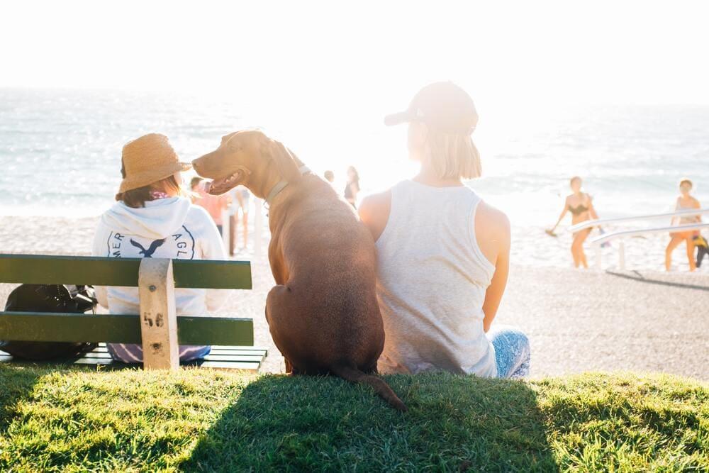 pies w upalne dni gorąc